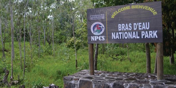 Hiking at Bras D'eau National Park